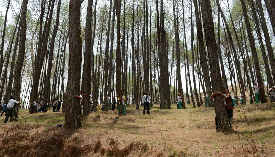 Nepalese school children hug trees in a bid to set a new world record for the largest tree hug as they celebrate World Environment Day in the forest of Gokarna village, on the outskirts of Kathmandu on June 5, 2014. Photo: PRAKASH MATHEMA, AFP/Getty Images / AFP