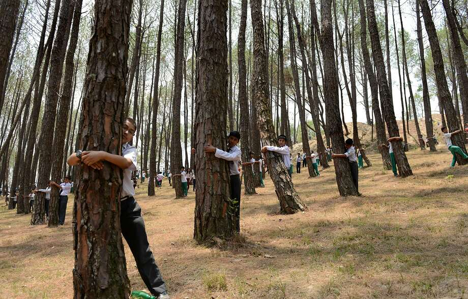 You don't have to be poplar to get a hug: On World Environment Day outside Katmandu, some 2,000 Nepalese students attempt to break the world record for largest group tree hug. Photo: Prakash Mathema, AFP/Getty Images