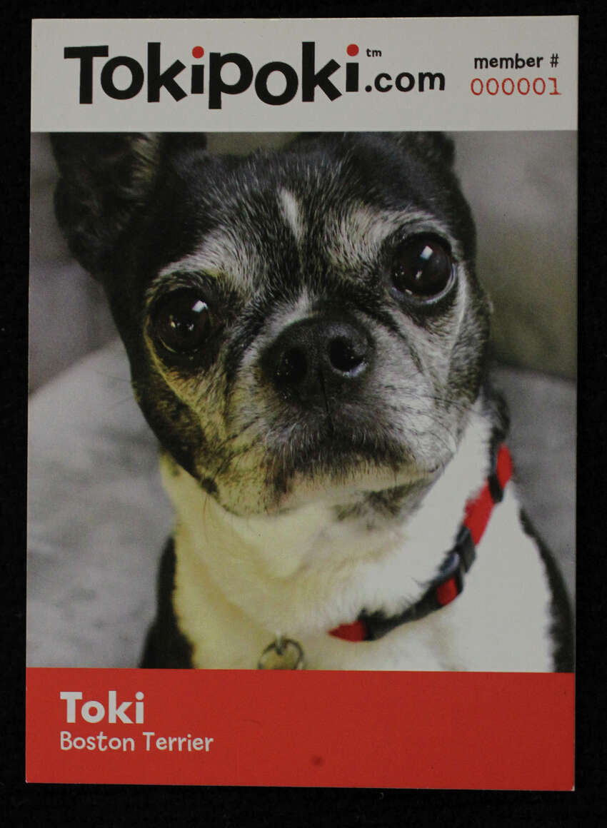This is an example of Toki Poki's product. Toki Poki, owned by Christy Myhre, makes pet trading cards for pet owners and for children's hospitals to give out to kid patients. This card shows the company's namesake Poki the Boston terrier.
