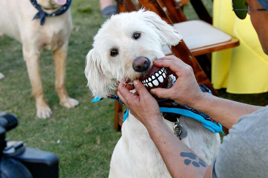 Is your dog all bark and no bite?Improve his smile with a tooth ball! (CMT One Country & Dentastix Smile! Party in Nashville, Tenn.) Photo: Terry Wyatt, Getty Images For CMT One County