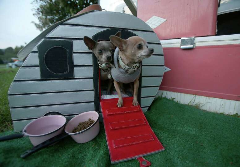 A pair of Chihuahuas emerge from their doghouse trailer at the Casini Ranch Family Campground in Dun