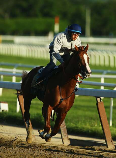 ELMONT, NY - MAY 31:  Kentucky Derby and Preakness winner California Chrome with Jockey Victor Espinoza up trains at Belmont Park on May 31, 2014 in Elmont, New York. He is scheduled to race for the Triple Crown in the 146th running of the Belmont Stakes  (Photo by Al Bello/Getty Images) Photo: Al Bello, Getty Images
