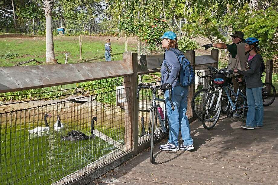 Get an early look at the S.F. Zoo, before its 10 a.m. opening time, at the Father's Day BikeAbout. Photo: Marianne Hale