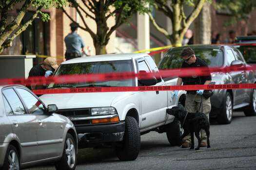 A bomb-sniffing dog searches a suspicious vehicle after a shooting at Seattle Pacific University on Thursday, June 5, 2014. Photo: JOSHUA TRUJILLO, SEATTLEPI.COM / SEATTLEPI.COM