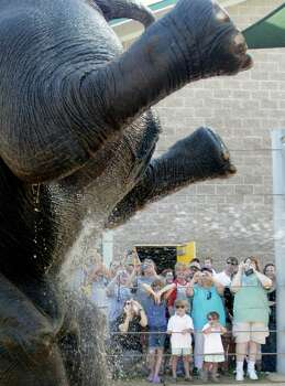 Elephant Open House guests take pictures while Tess stands on her head as she gets her morning bath at the Houston Zoo Saturday, June 18, 2011, in Houston. Photo: Cody Duty, Houston Chronicle / © 2011 Houston Chronicle