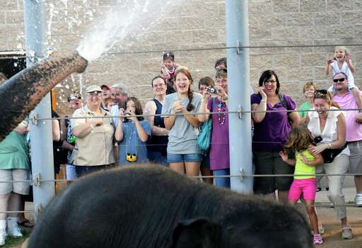 Elephant Open House guests react as Tess sprays them with water during her morning bath at the Houston Zoo Saturday, June 18, 2011, in Houston. Photo: Cody Duty, Houston Chronicle / © 2011 Houston Chronicle