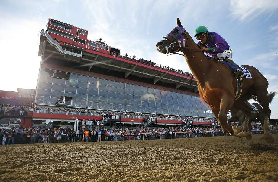 Jockey Victor Espinoza guides California Chrome to victory in the second leg of the Triple Crown, the Preakness. Photo: Matt Slocum, Associated Press