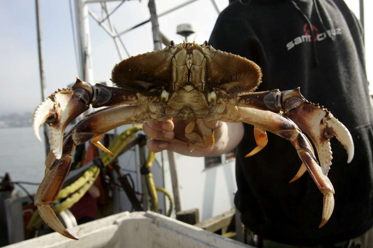Crab pots are expected to be back in the water when the commercial season finally opens on March 26, 2016.
