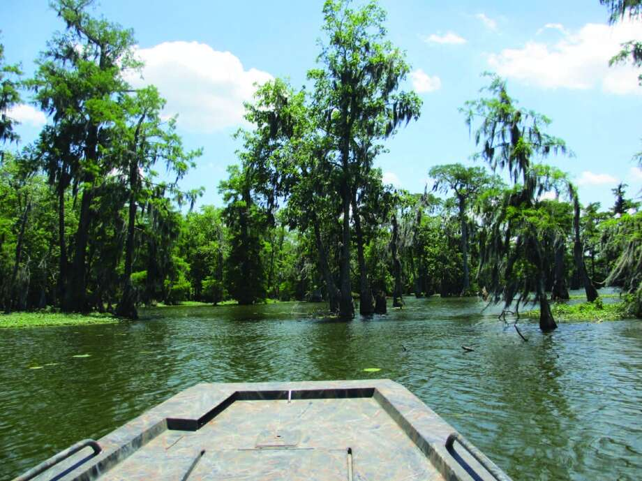 Swamp tours  wander into the nooks and crannies of Lake Martin, searching for birds and alligators. Photo: Terry Scott Bertling, San Antonio Express-News
