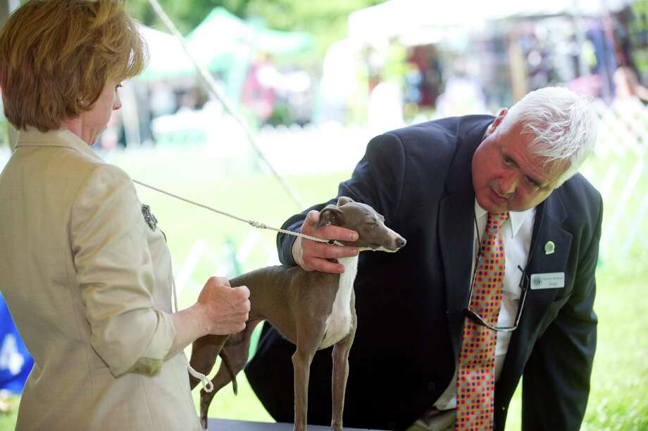 David Kirkland judges Marcy Caton's dog, Tracy, during the Greenwich Kennel Club's All-Breed Dog Show at Calf Pasture Beach in Norwalk, Conn., on Saturday, June 7, 2014. Photo: Lindsay Perry / Stamford Advocate