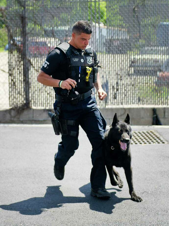Stamford police officer Doug Deiso demonstrates the skills of his German shepherd K-9, Turbo, during an event at the Elks Lodge in Stamford, Conn., on Saturday, June 7, 2014. Photo: Lindsay Perry / Stamford Advocate