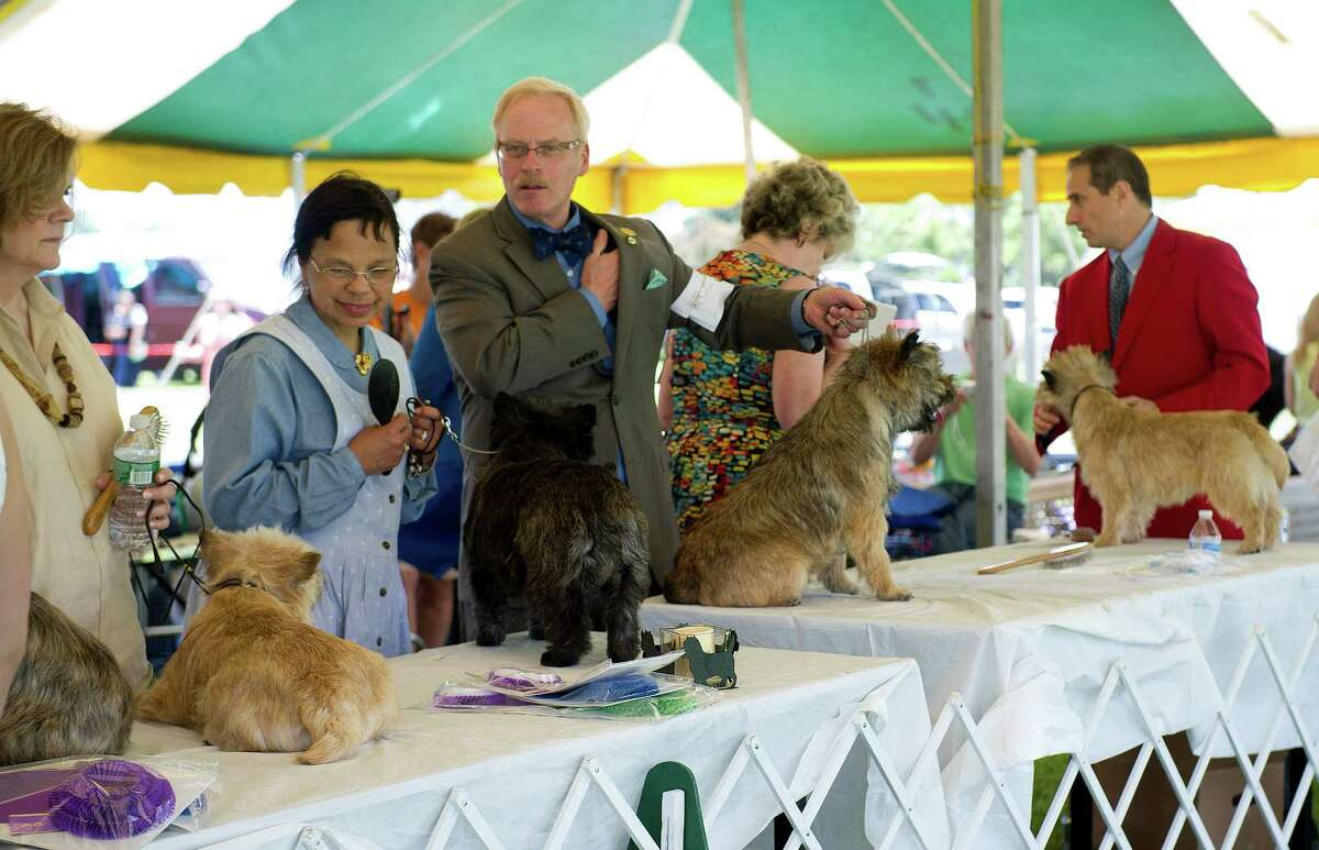 The Greenwich Kennel Club's All-Breed Dog Show at Calf Pasture Beach in Norwalk, Conn., on Saturday, June 7, 2014.