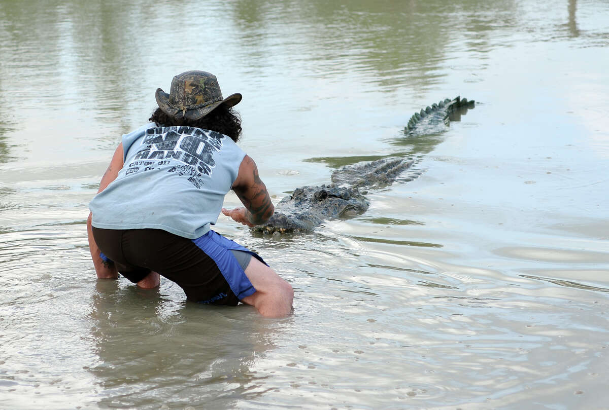 Arlie Hammonds gets close to Big Al, a 13-foot 4-inch alligator caught by Tillman Hoffpauir, at Gator Country on Saturday morning. The 2014 Gator Rescue Tournament was held at Gator Country on Saturday. Photo taken Saturday 6/7/14 Jake Daniels/@JakeD_in_SETX