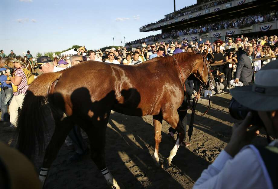 California Chrome is led off the track after finishing fourth in the Belmont Stakes and failing to capture the Triple Crown. Photo: Seth Wenig, Associated Press
