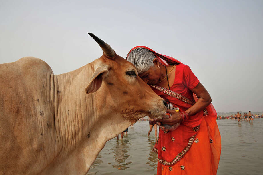 A woman worships a cow as Indian Hindus offer prayers to the River Ganges, holy to them during the Ganga Dussehra festival in Allahabad, India, Sunday, June 8, 2014. Allahabad on the confluence of rivers the Ganges and the Yamuna is one of Hinduism's holiest centers. Photo: Rajesh Kumar Singh, AP / AP