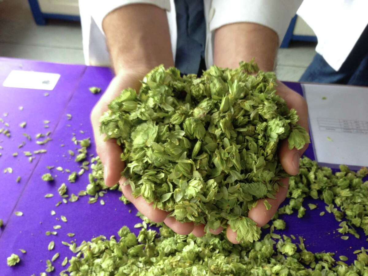 Saint Arnold Brewing Co. owner Brock Wagner with his hands full of hops during a buying trip to Zatec, Czech Republic, October 2013.