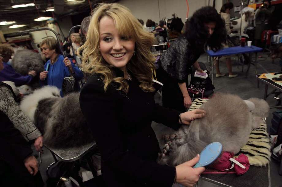 NEW YORK - FEBRUARY 15:  Lacy Williams of Silver Lake, Oregon (L) grooms her miniature poodel Diva backstage at the Westminster Kennel Club Dog Show February 15, 2010 in New York, New York.  The 134th Westminster Kennel Club Dog Show is taking place February 15 and 16 in New York's Madison Square Garden, and dog breeders from around the country and world have flown in to take part.  (Photo by Chris Hondros/Getty Images) *** Local Caption *** Lacy Williams Photo: Chris Hondros, Getty Images / 2010 Getty Images