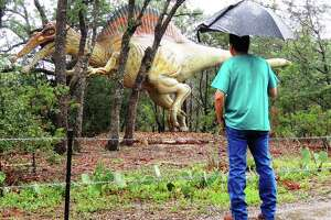 A giant spinosaurus, among the largest of carnivorous dinosaurs, charges through the trees at Dinosaur Park near Bastrop.