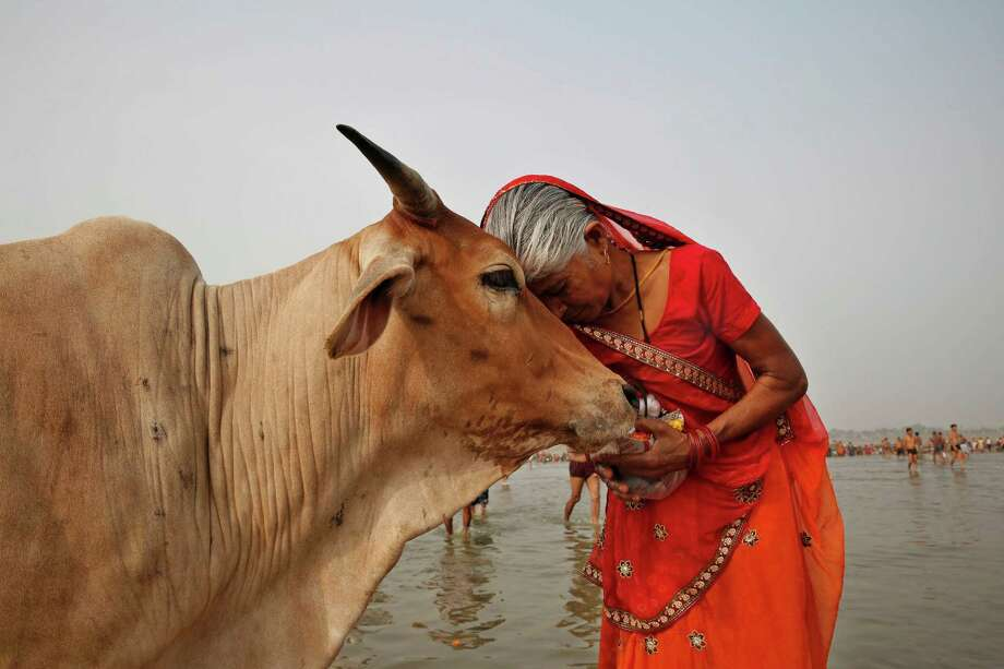 Holy cow: A woman worships a bovine as Hindus offer prayers to the River Ganges during the Ganga Dussehra festival in Allahabad, India. Photo: Rajesh Kumar Singh / Associated Press / AP