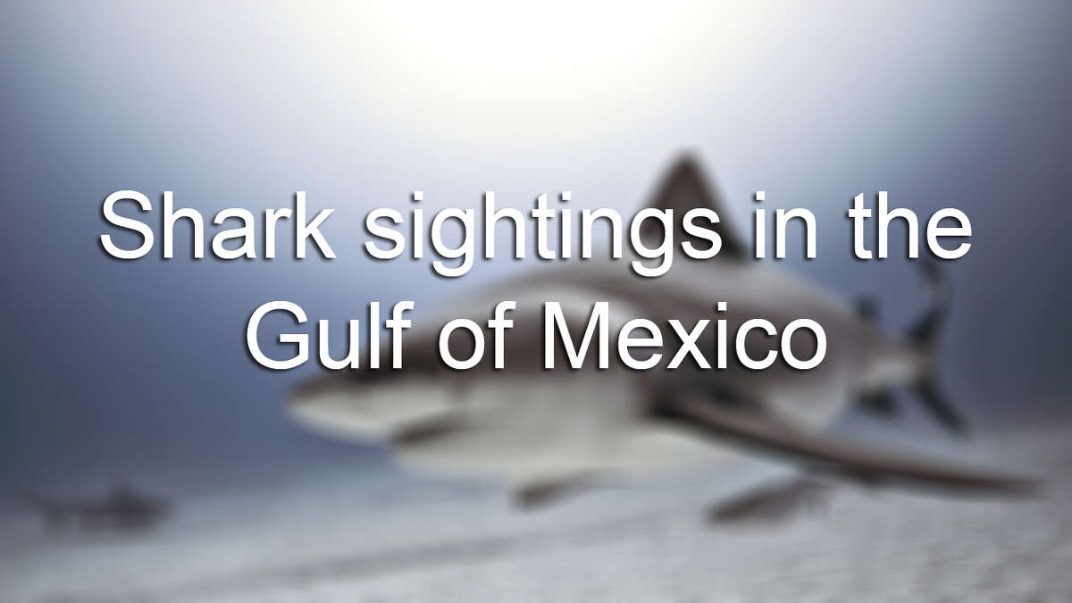 Shark sightings in the gulf of Mexico.