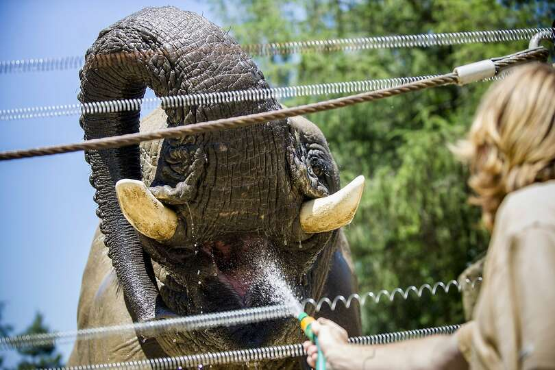 An elephant enjoys cold water in its enclosure at the Dvur Kralove nad Labem Zoo, 150 kilometres (93