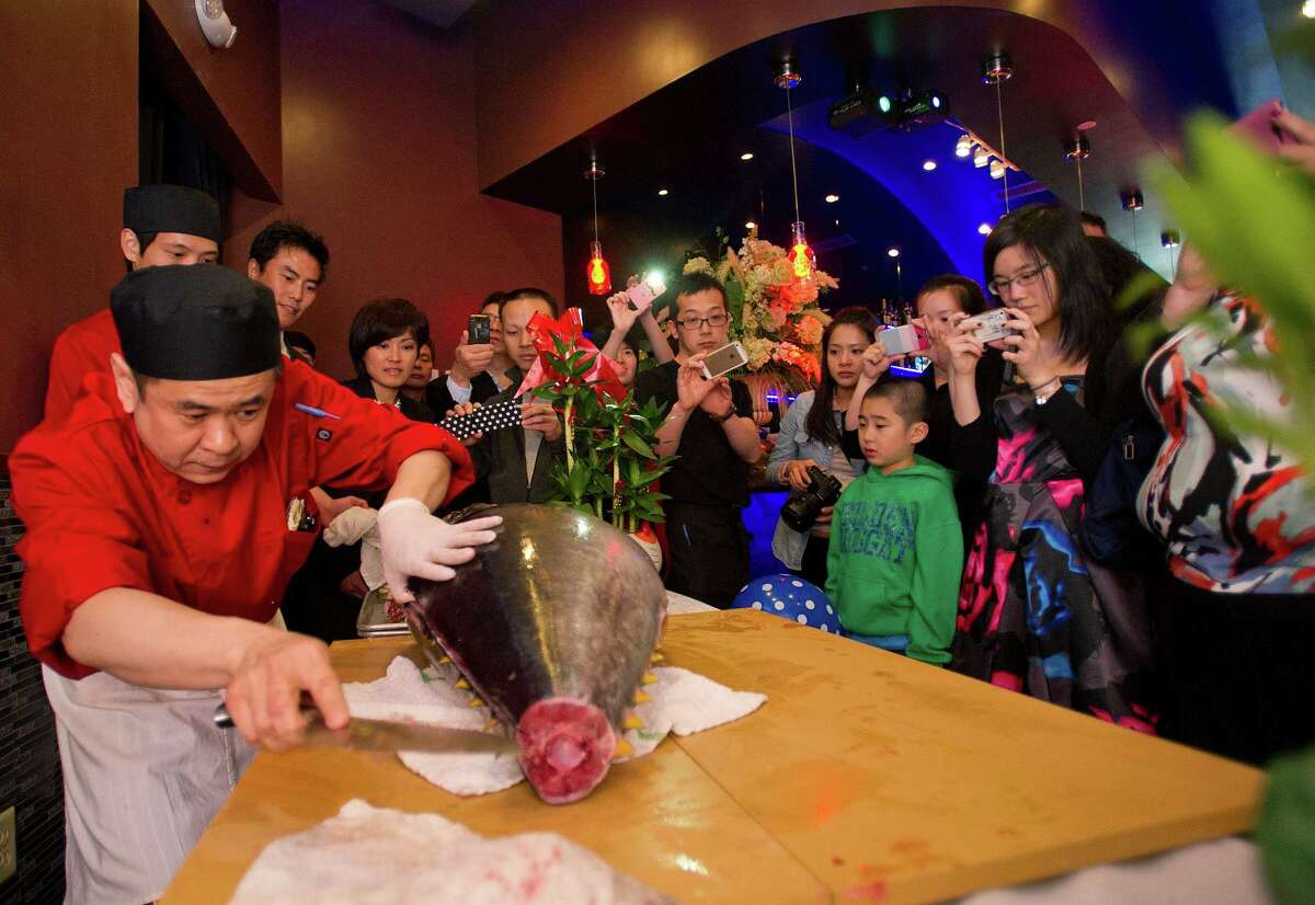 Head Sushi Chef Stanley Yong cuts into a $1000 big-eye tuna during a fish-slicing demonstration during Asian Bistro's grand opening celebration on Wednesday, May 28, 2014.