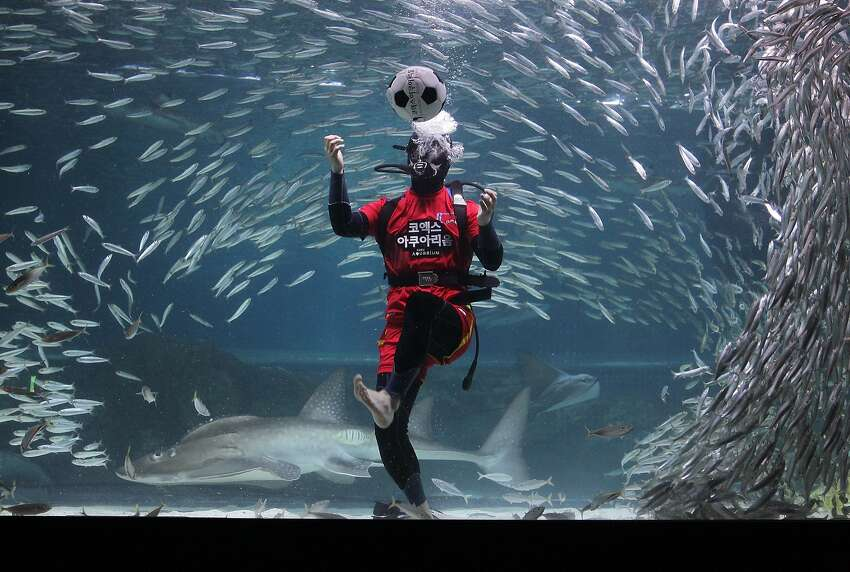 SEOUL, SOUTH KOREA - JUNE 09: A South Korean diver clads in soccer uniform swims with sardines for South Korean team's success in the 2014 FIFA World Cup Brazil at the Coex Aquarium on June 9, 2014 in Seoul, South Korea. The 2014 FIFA World Cup Brazil begins on June 12, 2014. (Photo by Chung Sung-Jun/Getty Images) *** BESTPIX ***