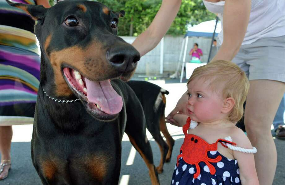 Lily Dunn, 1, of New Canaan, meets Bronco at the the fifth annual Dog Days festival in downtown New Canaan Sunday, June 8. Jarret Liotta / For the New Canaan News Photo: Contributed Photo, Contributed / New Canaan News Contributed