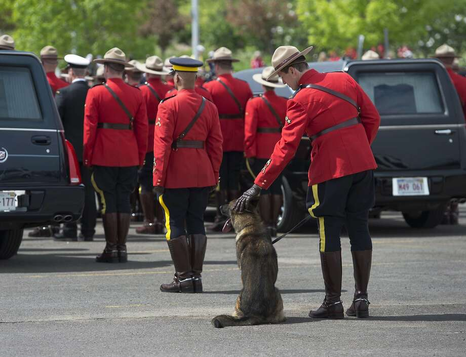 Goodbye to his best friend:A Mountie pets David Ross' K-9 partner, Danny, during the funeral for Ross and two other mounted 