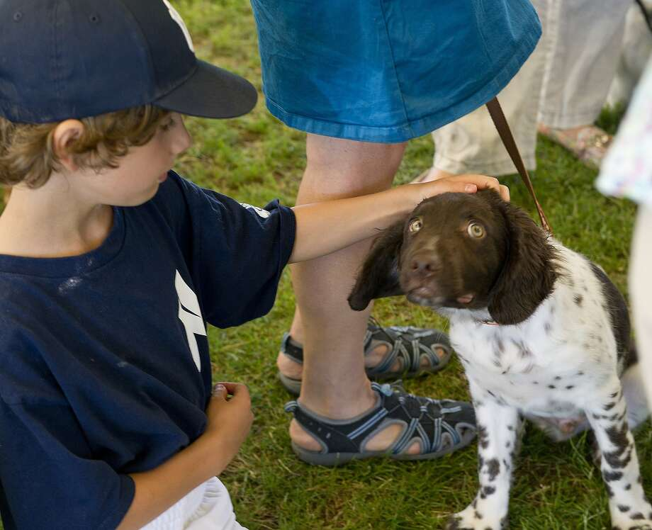 Don't worry, boy: I'm sure the judge won't dock you for peeing on his foot. (Greenwich Kennel Club's All-Breed Dog Show in Norwalk, Conn.) Photo: Lindsay Perry, Connecticut Post