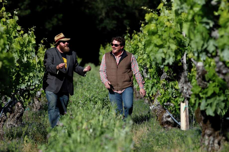 Chris Cottrell, left and Morgan Twain-Peterson, walk through the120 year old Zinfandel vines, Wednesday April 23, 2014, in Glen Ellen, Calif. Photo: Lacy Atkins, Staff Photographer / ONLINE_YES