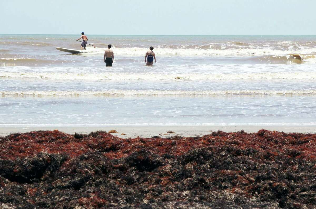 """Tourists are grumbling and cleanup crews are scrambling as the seaweed problem continues to grow on Galveston beaches. Officials called it a """"never-ending"""" problem on Wednesday, June 11, 2014."""