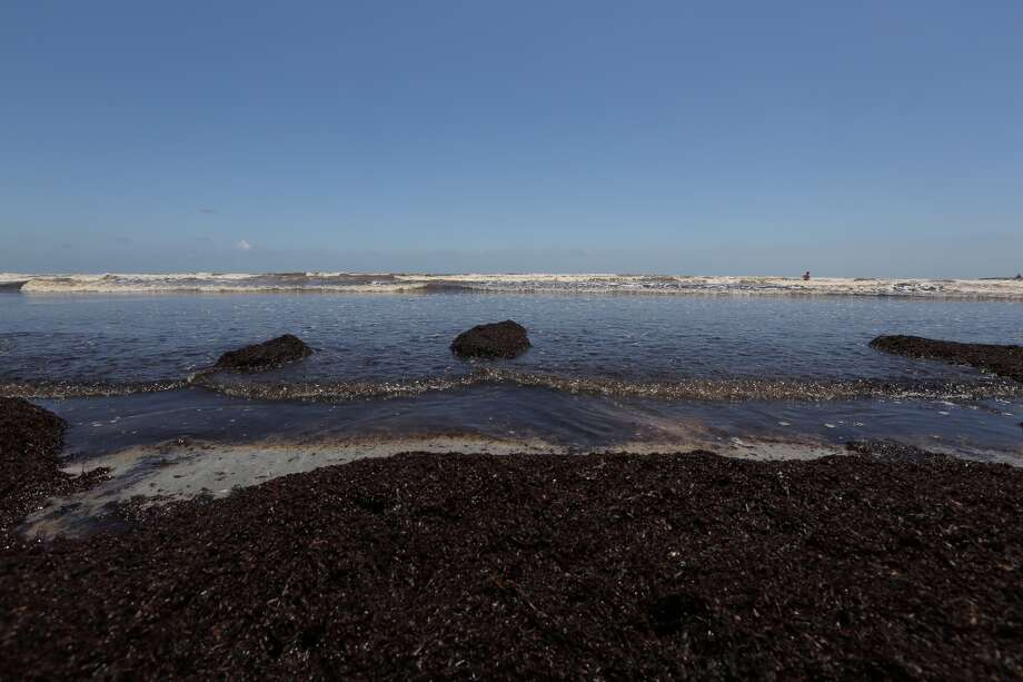 Tourists are grumbling and cleanup crews are scrambling as the seaweed problem continues to grow on Galveston beaches. Photo: James Nielsen / Houston Chronicle