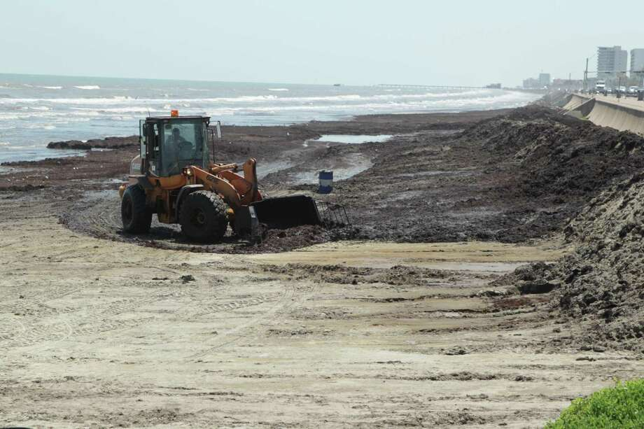 "Tourists are grumbling and cleanup crews are scrambling as the seaweed problem continues to grow on Galveston beaches. Officials called it a ""never-ending"" problem on Wednesday, June 11, 2014. Photo: James Nielsen, James Nielsen / Houston Chronicle / Houston Chronicle 2011"