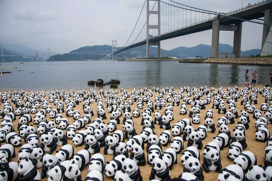 Sandy paws: Papier-mache pandas take over a beach under the Tsing Ma Bridge in Hong Kong. The 1,600 figures were created by French artist Paulo Grangeon to promote the protection of endangered animals. Photo: ChinaFotoPress, Getty Images