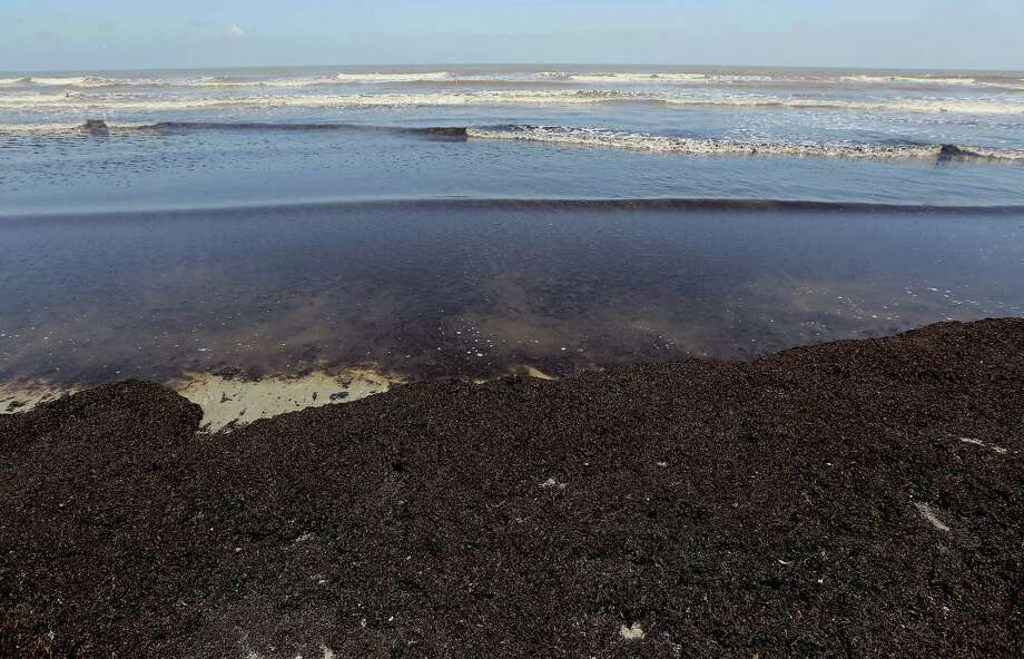 Seaweed washes ashore on the beaches along Seawall Boulevard Wednesday, June 11, 2014, in Galveston. Photo: James Nielsen, Houston Chronicle / © 2014  Houston Chronicle