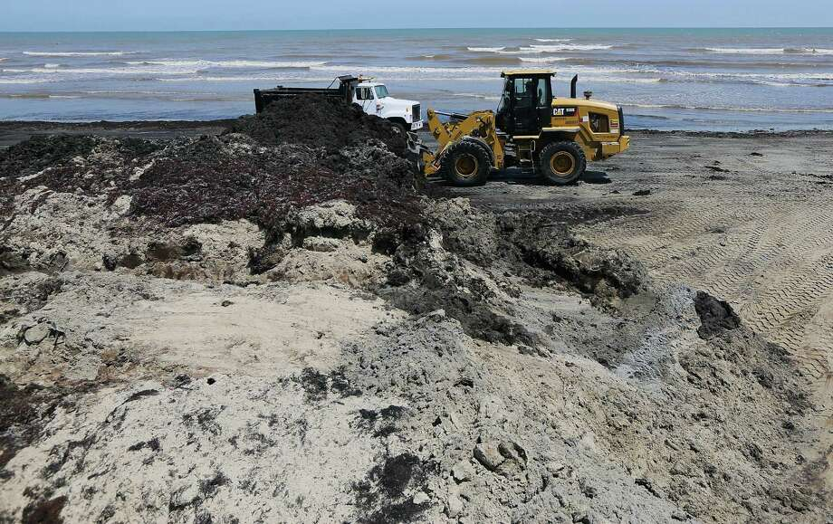 A wheel loader dumps a bucket of seaweed into a dump truck on the beaches along Seawall Boulevard Wednesday, June 11, 2014, in Galveston. Photo: James Nielsen, Houston Chronicle / © 2014  Houston Chronicle