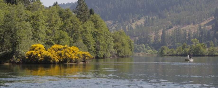 One of the better fishing spots: blooming Scotch broom marks the spot Photo: Tom Stienstra
