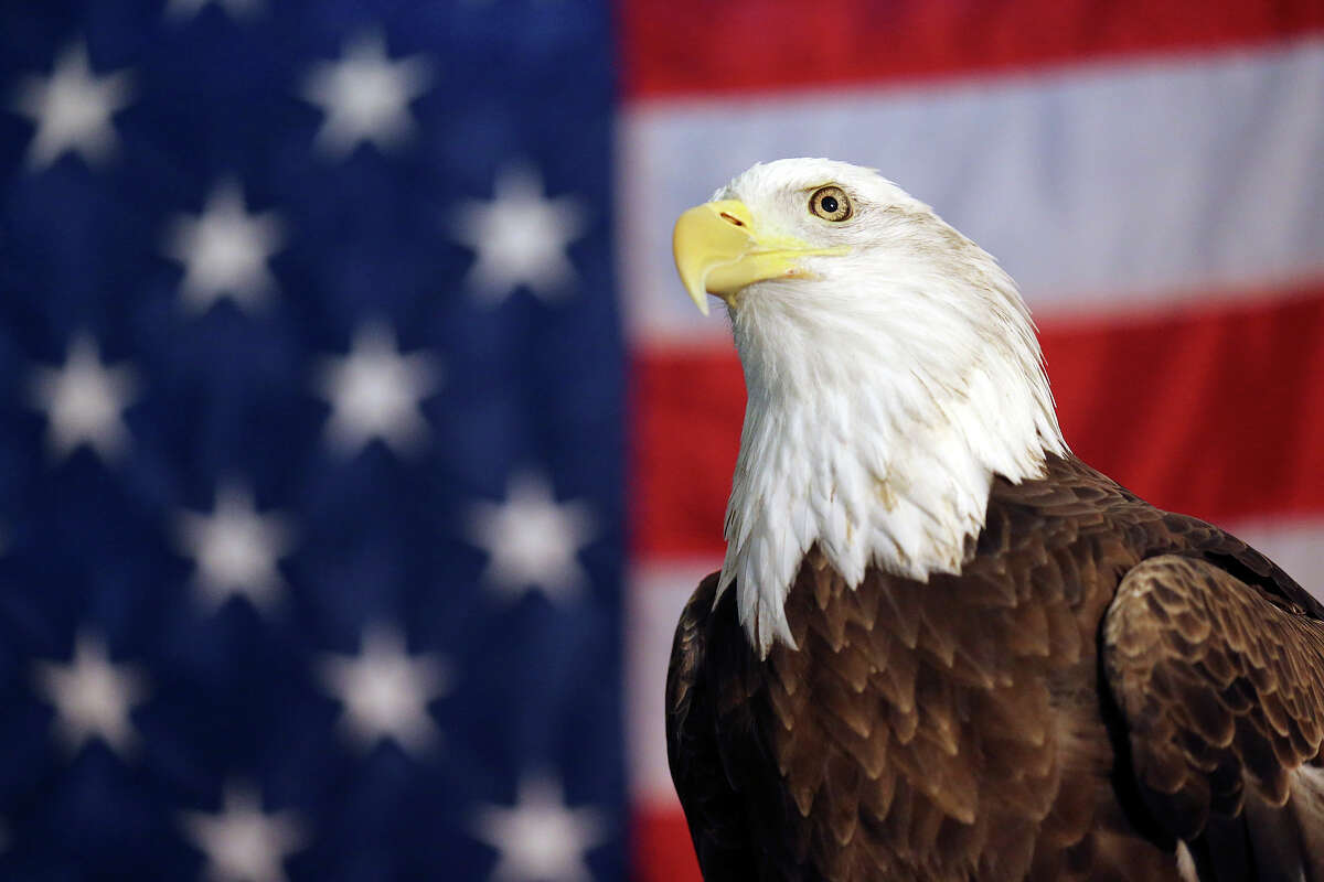 And since the introduction of the seal, the Bald Eagle has been considered the national bird, and currently the country's only national animal.