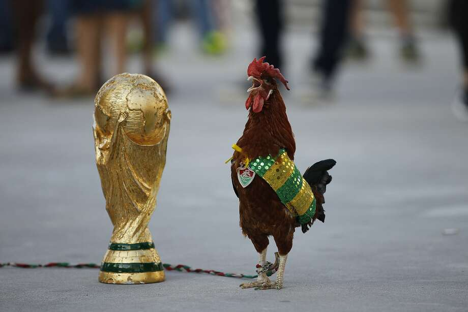 A pet rooster named Paquita Fred stands next to a replica of the World Cup trophy in front of Maracana stadium, in Rio de Janeiro, Brazil, Wednesday, June 11, 2014. The 11 year old rooster wearing a cape with the colors of the Brazilian national soccer team and a medallion of the local Fluminense soccer club gets his name from Fred, the Brazilian footballer who plays as a striker for Fluminense and is now one of the members of the national soccer team. The World Cup soccer tournament starts Thursday. (AP Photo/Leo Correa) Photo: Leo Correa, Associated Press