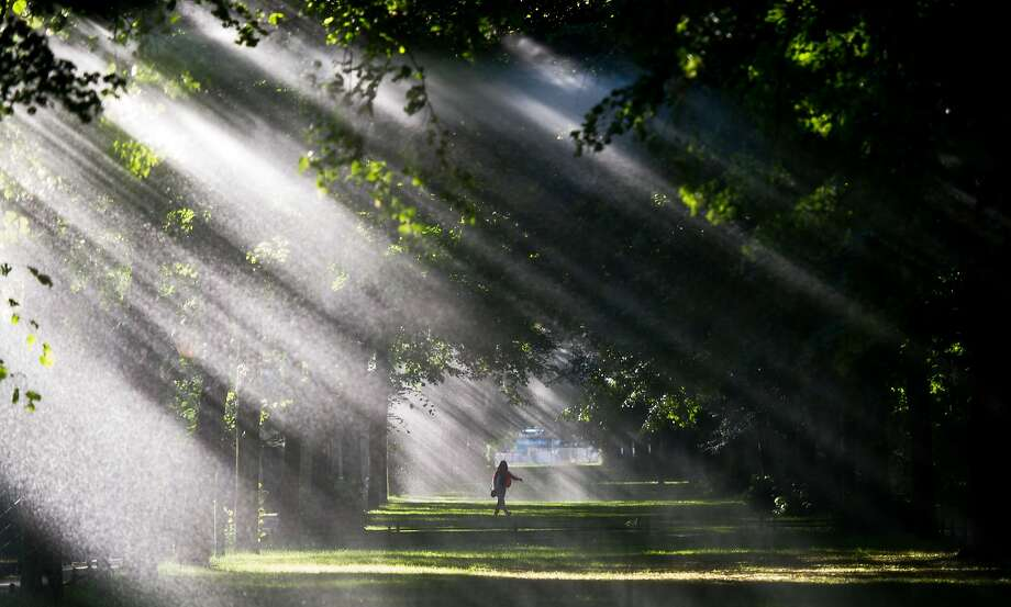 An early riser strolls through the Tiergarten park as the morning sun shines through the trees in Berlin. Photo: Maja Hitij, Associated Press