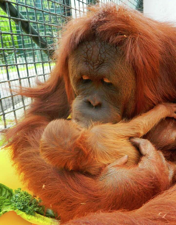 Maggie hugs her newborn son. Photo: Contributed Photo / Greenwich Time Contributed