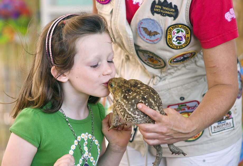 How long does it take to turn into a prince?Josie Lang kisses a frog - actually a South American cane toad -at 
