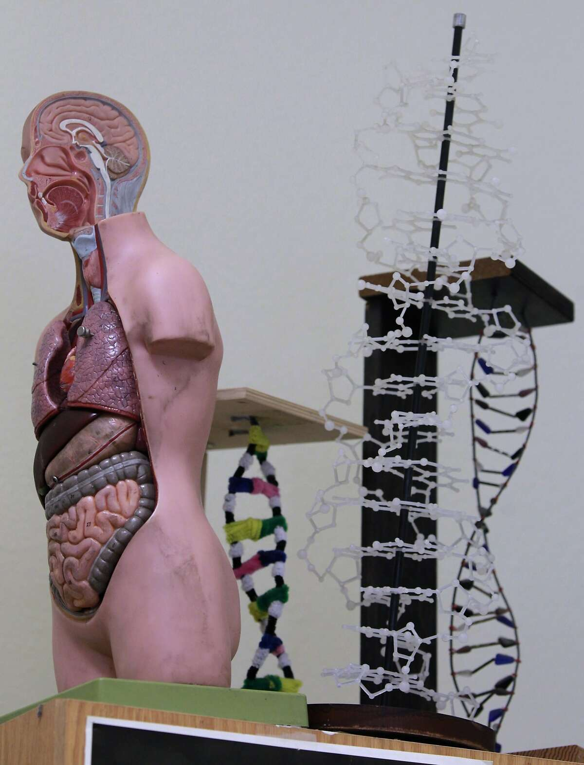 Models of the human body and strands of DNA are put away for the summer break in science teacher Glenn Wolkenfeld's Berkeley High School classroom in Berkeley, Calif. on Friday, June 13, 2014. Wolkenfeld has taught at Berkeley High for 15 years and has been named as one of the school district's top teachers of the year.