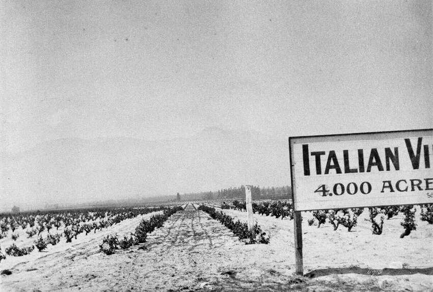 A view of Secondo Guasti's vineyards, looking north toward the mountains from 1909, described at the time as the world's largest vineyard.