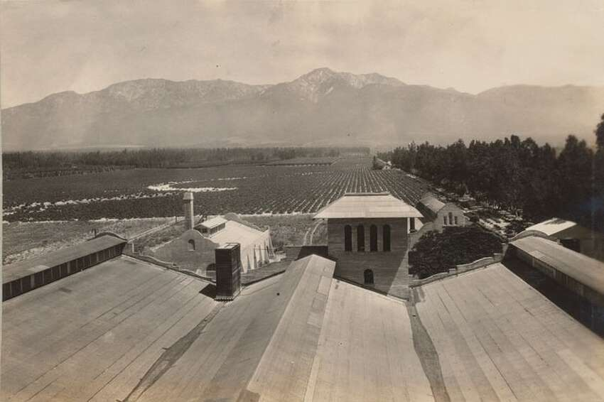 A view of the vineyards from a winery rooftop, from a 1925 appraisal of the Mission Vineyard properties.