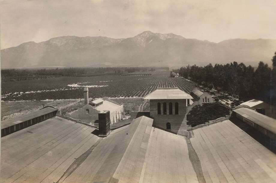 A view of the vineyards from a winery rooftop, from a 1925 appraisal of the Mission Vineyard properties. Photo: City Of Rancho Cucamonga