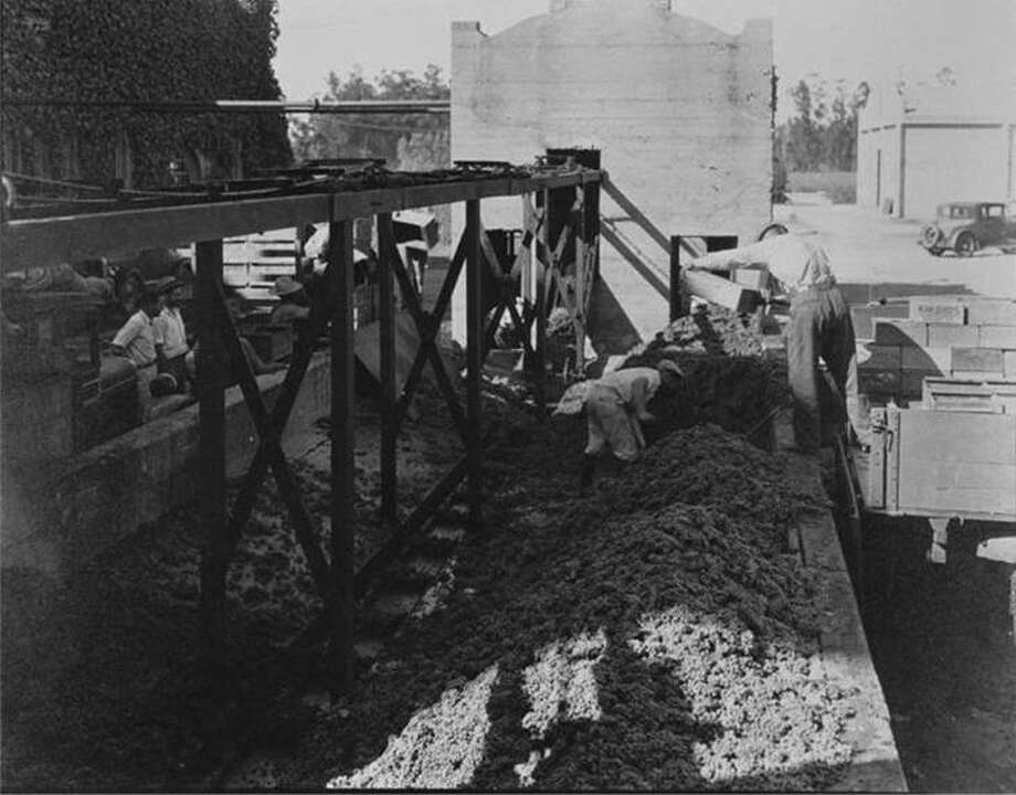 Men loading grapes onto a conveyor belt at the Virginia Dare winery, circa 1925. Photo: City Of Rancho Cucamonga
