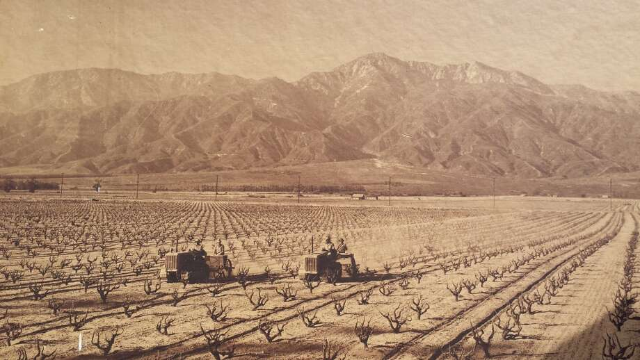 A 1940s photograph showing vineyards in the Cucamonga Valley near what is now the Ontario airport. The land, once owned by the Guasti and Hofer families, among others, was largely annexed to make way for the airport and other development. Photo: Courtesy Paul Hofer III