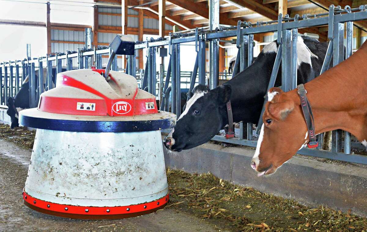 A Lely Juno feed pusher robot in action at O.A. Borden & Sons dairy farm Thursday June 12, 2014, in Schaghticoke, NY.(John Carl D'Annibale / Times Union)